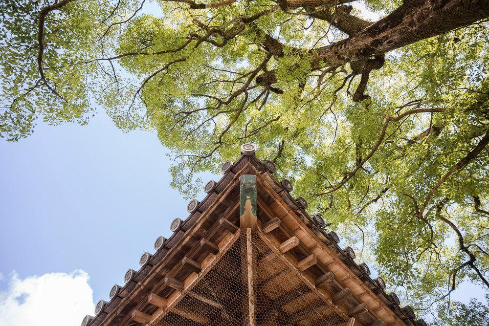 roof-coating-contractors.jpg