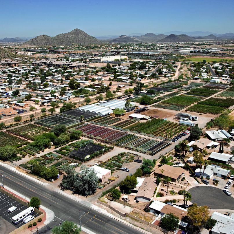 Desert Tree Farm Whole Nursery