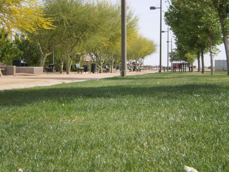 tumbleweed-park-7.jpg