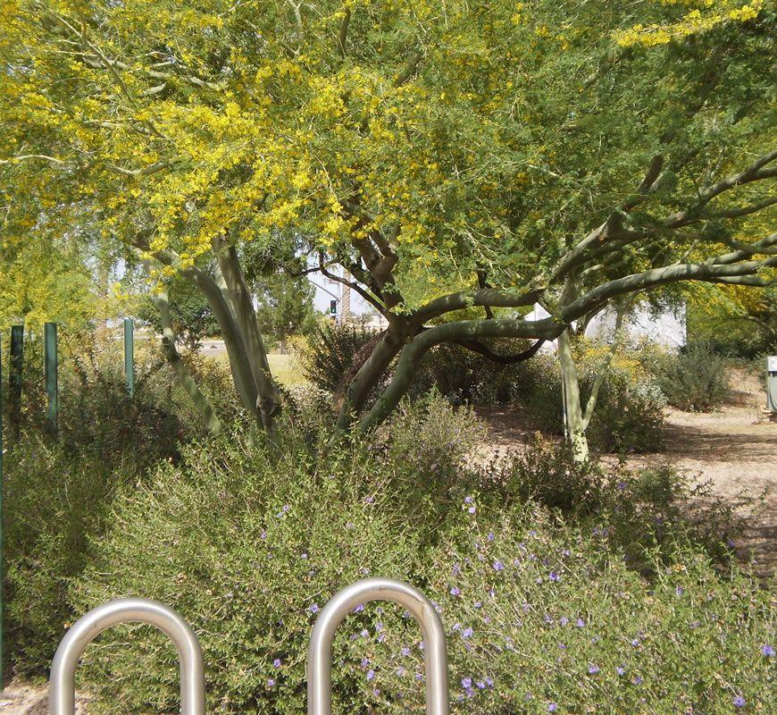 tumbleweed-park-1.jpg