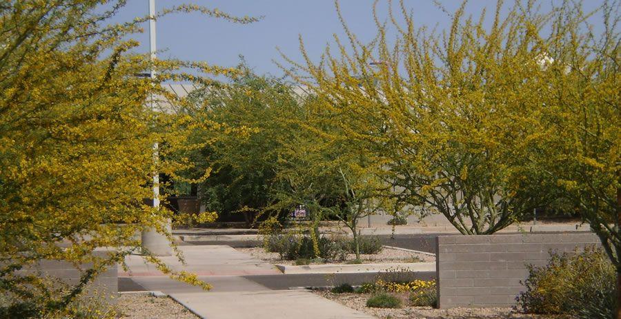 mesquite-groves-2.jpg