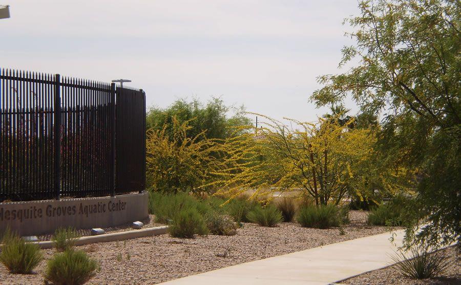 mesquite-groves-1.jpg