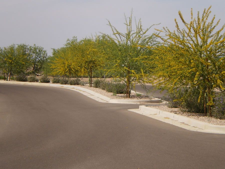 mesquite-groves-3.jpg